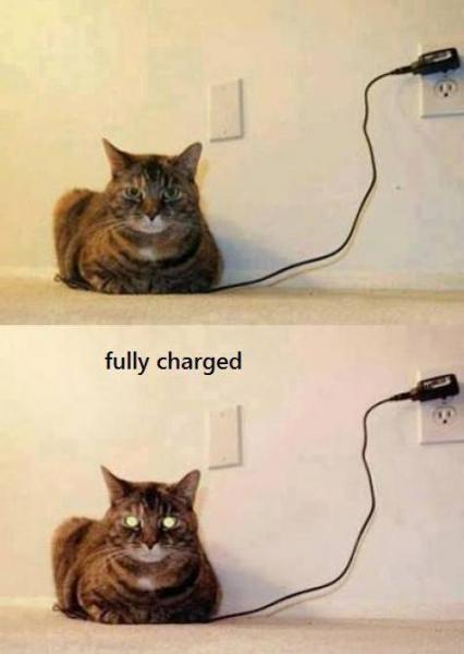 charged-cat-156.jpg